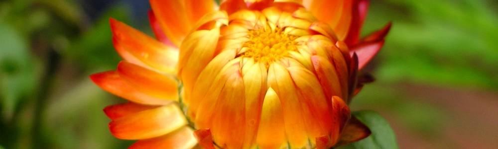 Blumen (17)